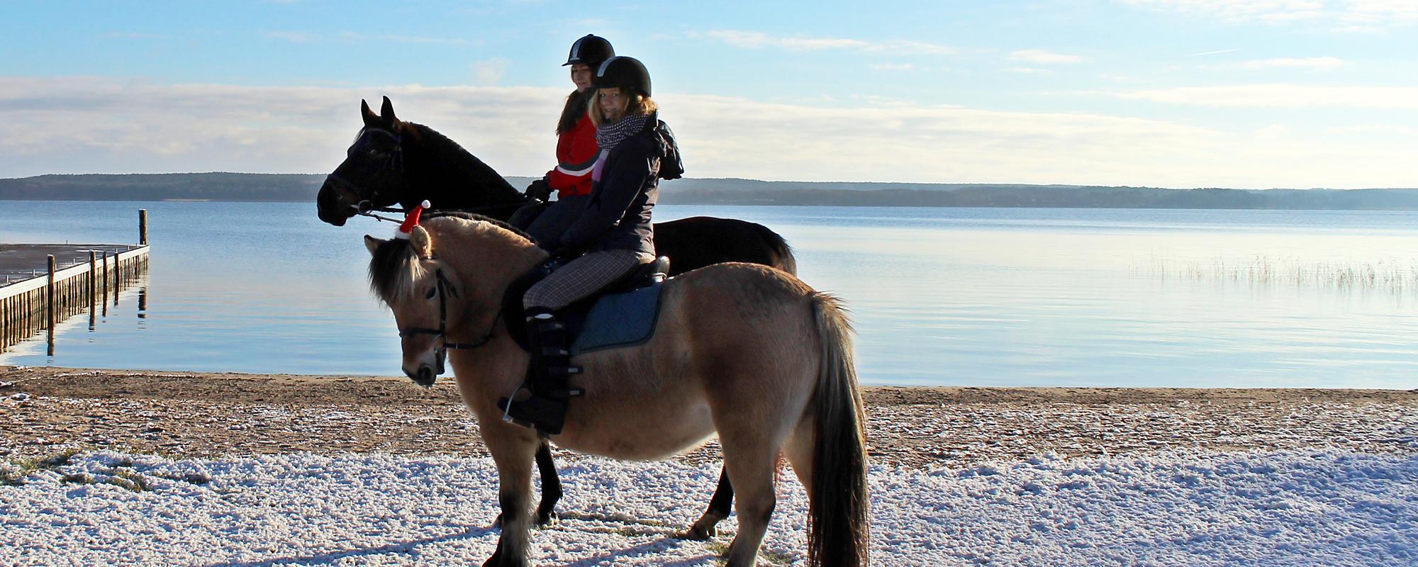 Ferienpark Heidenhol Ponyreiten