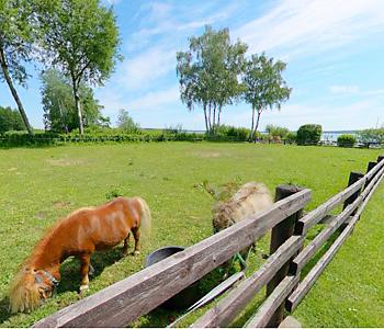 Ferienpark Heidenholz Pferdekoppel am See